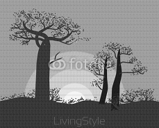 Tranquil silhouette of baobabs on a sunset sky scene in nature of Madagascar 98013334