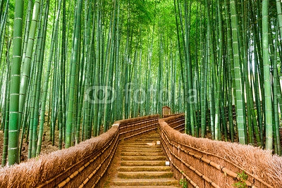 Kyoto, Japan Bamboo Forest 97156437