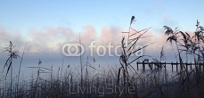 Wintermorgen am Ammersee 96575715