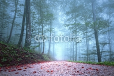 Beautiful foggy seasonal forest road. 119004161