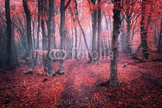 Beautiful magic red forest in fog in autumn. Fairytale landscape 116066387