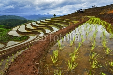 Terrace rice field in north Thailand 112769742