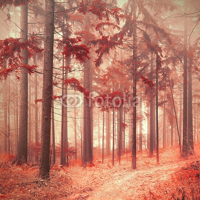 Fantasy red color saturated and foggy forest landscape. Picture was taken in south east Slovenia, Europe. 89018745