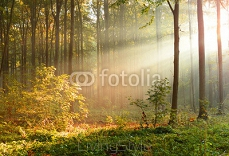 Beautiful morning in the forest 126964349