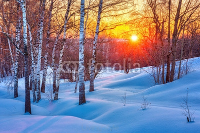 Colorful sunset in winter forest 124568253