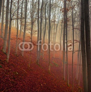 Autumn day in the enchanted forest  95092404