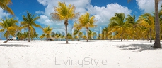 Palm trees on the white sand. Playa Sirena. Cayo Largo. Cuba. 83011355