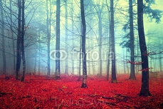Fantasy autumn forest scene 69807278