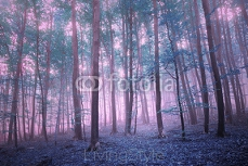Fantasy pink blue saturated mystic foggy beech forest landscape. 122000026