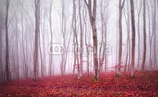 Red colored foggy light in beautiful magic forest landscape. 104956922