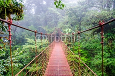 Bridge in Rainforest - Costa Rica - Monteverde 79141376