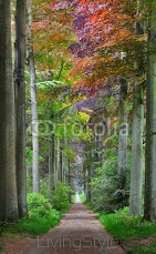 Walkway in a green Spring beech forest in Leuven, Belgium 127931020