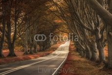 Beautiful surreal alternate colored forest landscape 101321663