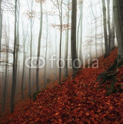 Autumn day in the enchanted forest  95092590