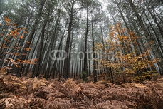 forest 74085841