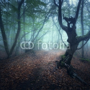 Dark fog forest. Fall woods. Mystical autumn forest with trail in green fog. Old Tree. Beautiful landscape with trees,  path, colorful orange and green foliage, fog. Nature background. Foggy forest  122548972