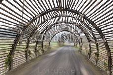 Bamboo tunnel speed road,abstract background 91809040