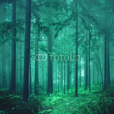 Magical green colored foggy fairytale forest 84533362