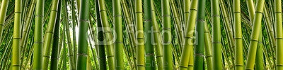 Dense Bamboo Jungle 77716468