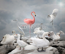 Stand out from a crowd - Flamingo and white birds 100712730