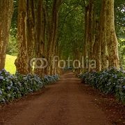 path with tree on two side in azores 3729741