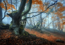 Mystical autumn forest in fog. Magical old trees in clouds. Colorful landscape with foggy forest, trail, orange foliage in Crimea. Fairy forest in autumn. Fall woods. Enchanted green trees 125285641