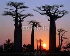 Baobab Alley, Madagaskar 125126683