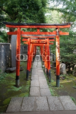 Torii Gates  w Nezu Shrine