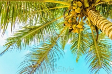 Amazing sandy beach with coconut palm against  blue sky 81121383