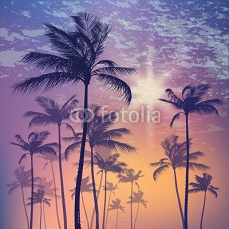 Silhouette of palm tree and sunset sky 124958626