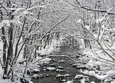 River in the winter forest 111302963