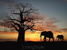 Group of elephant in africa 9699496