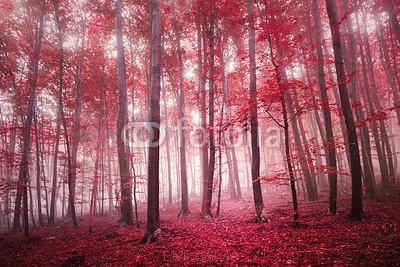 Red saturated mystic autumn season beech forest landscape. Red color filter tone used. 121195671
