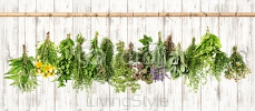 Medicinal herbs. Herbal apothecary. Lavender, dandelion, nettle 101578171
