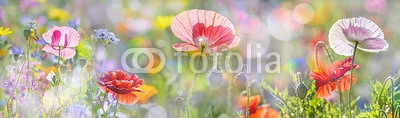 summer meadow with red poppies 101499133