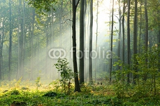 Morning in the forest 125500488