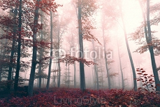 Beautiful red colored foggy forest landscape 83271756